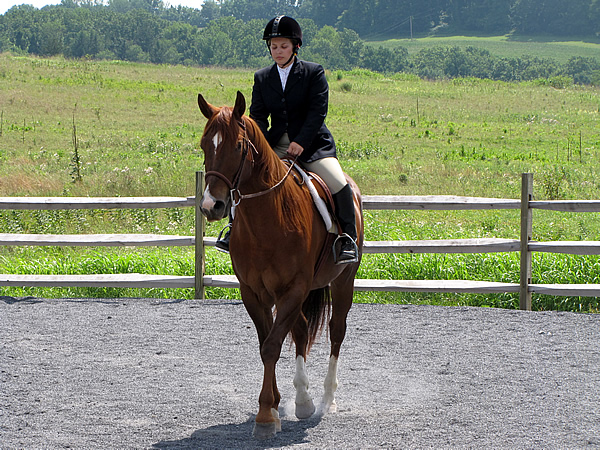hourse back riding english or western English riding vs western riding an overview of english and western different activities you can do with your horse, whether you ride english or western.